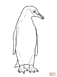 chinstrap penguin coloring page free printable coloring pages