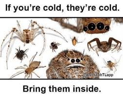 Cute Spider Meme - memebase spiders all your memes in our base funny memes