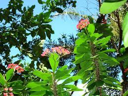 flowers hawaii world tropical garden island gardens peace flower