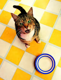 taurine content in raw food for cats pets