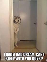 Siberian Husky Meme - monday meme 16 feet