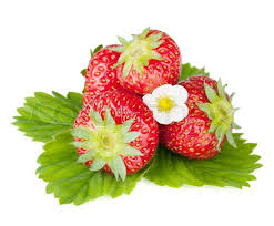 fruit and flowers four strawberry fruits with green leaves and flowers stock photo