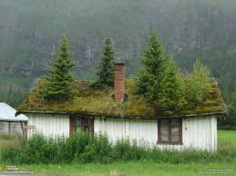 trees on a house in norway imgur
