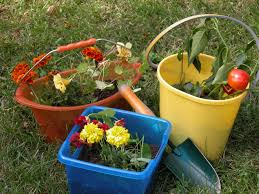 How To Plant Vegetables In A Garden by Keep Your Desert Garden Healthy With These Monthly Tips