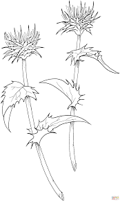 milk coloring pages milk thistle coloring page free printable coloring pages
