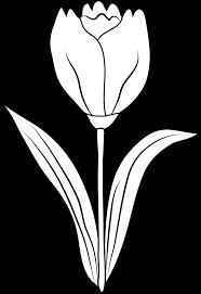 clipart tulip outline clipart panda free clipart images