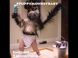 Baby Monkey Meme - puppy monkey baby song superbowl mountain dew kickstart swedish