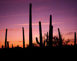 Bike Maps Official Website Of The City Of Tucson Tucson Arizona Tourism Tourist Offices Addresses Phone Numbers