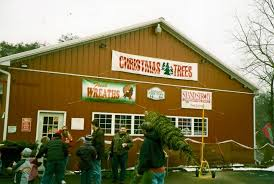 arnold u0027s christmas tree farm shermans dale pa