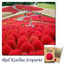compare prices on ornamental grasses shopping buy low