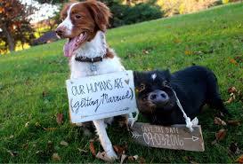 dog pig sister big imgur