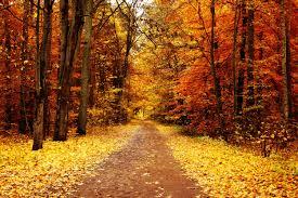 imagenes de otoño para fondo de escritorio paisajes de otoño para fondos de pantalla otoño wallpapers