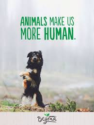 australian shepherd quotes 76 best food for thought images on pinterest animal quotes