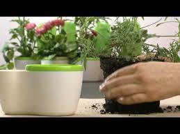 herbs planter tupperware fresh herbs planter wmv youtube