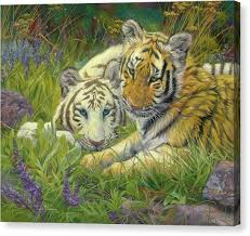 white siberian tiger canvas prints america