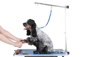 used dog grooming table pet grooming articles and tips enlighten me