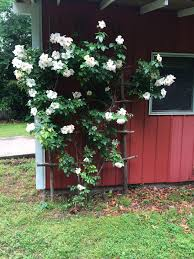 diy large rustic rose trellis hawk hill