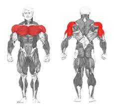 decline bench press muscles plt 055 decline bench a l v3erre usa training attezzature