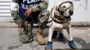 dogs help mexico city dig out after earthquake