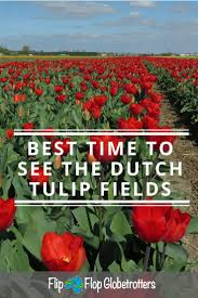 Netherlands Tulip Fields Tulip Fields In Holland When And Where U2022 Flipflopglobetrotters Com