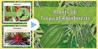 Adaptations Of Tropical Rainforest Plants - of the rainforest powerpoint