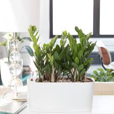 Window Sill Planter by Heartleaf Philodendron Plant Potted In Windowsill Planters