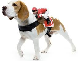 Riding Costumes Halloween 1621 Doggie Halloween Costumes Images Costume