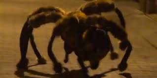 dog dressed up like giant spider will scare the kibble out of you