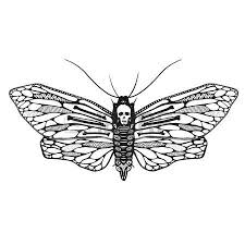 black and white mystical moth with skull on wings vector