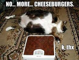 I Can Has Cheezburger Meme - lol cats i can has cheezburger mental floss