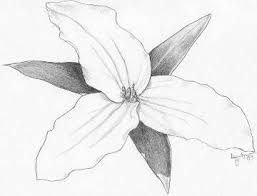 pictures pencil sketch drawing flowers and nature drawing art