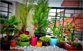 terrace garden plants excellent terraced rooftop garden design