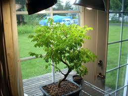 fluorescent lights cozy fluorescent light and plants 9