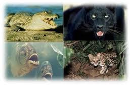 imagenes de animales carnivoros para imprimir reino animal monografias com