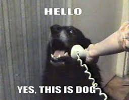 Hello Meme - hello yes this is dog origin of the meme squeaker