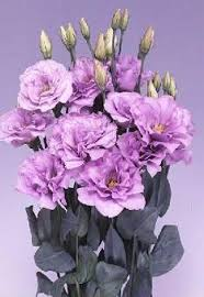 lisianthus flower lisianthus seeds from around the world in retail packs