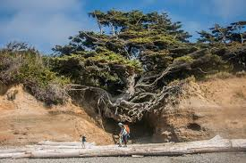 roadtrip with toddlers kalaloch tree root cave olympic national