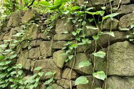 Rock Tunnel Leaf Green Map Pohukaina Cave 2015 03 15