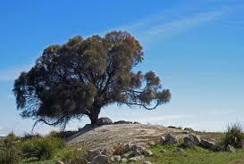 Rock Gardens Green Bay by Tough Plants Reforestation Me