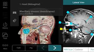 What Is Human Anatomy And Physiology Human Anatomy Atlas Org Android Apps On Google Play