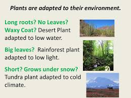Adaptations Of Tropical Rainforest Plants - all animals and plants have adaptations that help them survive in