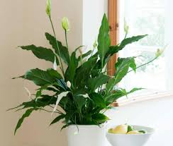 small low light plants radiant common plants ideas gll common plants ideas gll to beauteous