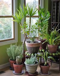 intro to houseplants online course starts in january 2013