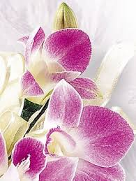 Orchid Corsage Deep Purple Orchid Corsage Interflora