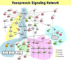 Nih Map Systems Biology In Physiology The Vasopressin Signaling Network