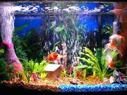 Fish Tank Decorations Backgrounds Ideasnatural Ideas Natural