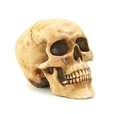 skull decor gifts decor grinning realistic replica human skull
