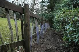 native hedging plants uk native hedging in the tarn house garden tarn house luxury 8
