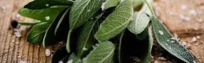 sauge en cuisine sauge origine utilisation en cuisine et recettes ducros