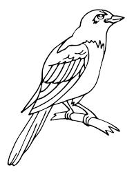 imagenes del animal urraca dibujo de urraca para colorear dibujos para colorear imprimir gratis